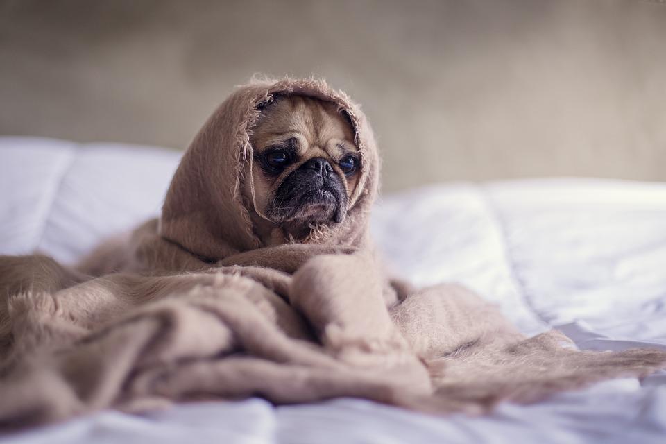Dog Blanket Pug Animal Bed Pet Face Funny